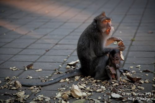 Snacking mum & baby, Ubud, Bali, Indonesia