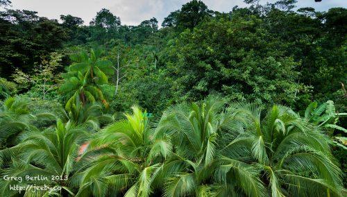 Beautiful Jungle Surrounds of Guaria de Osa in Costa Rica