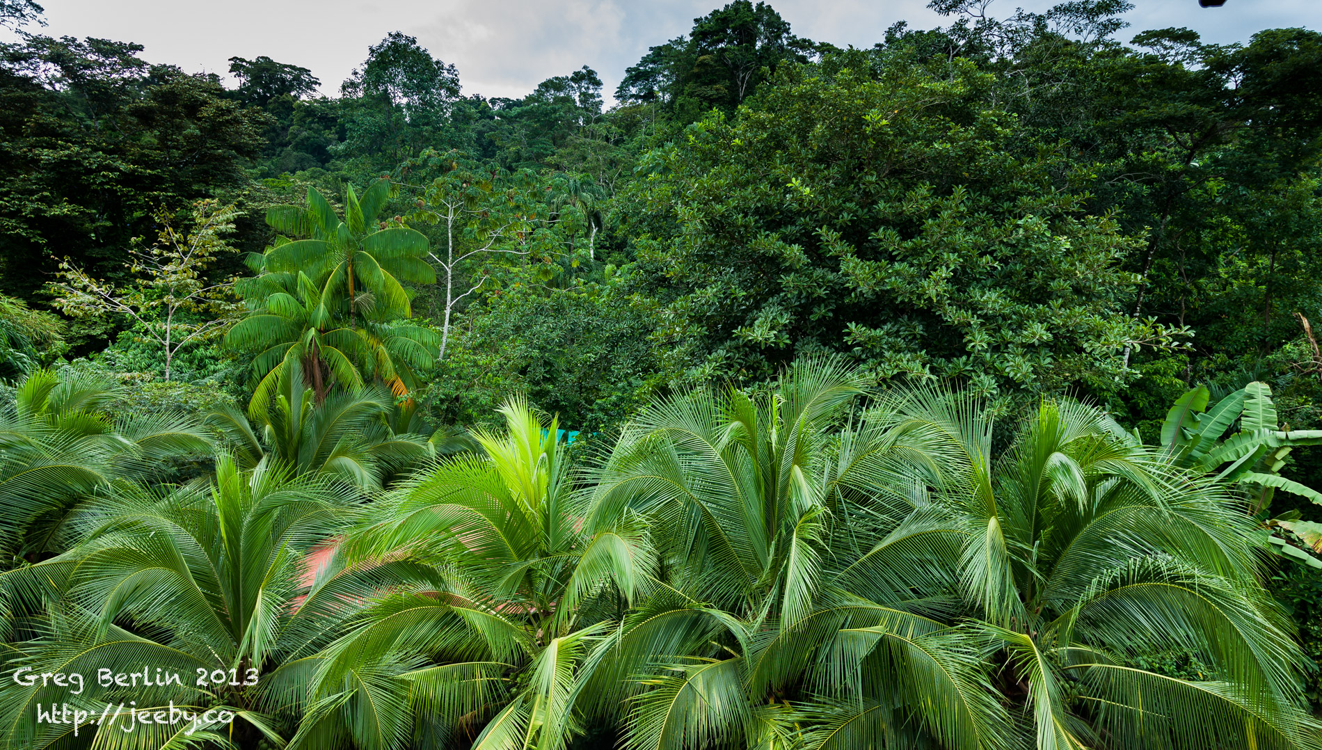 Beautiful Jungle Surrounds of Guaria de Osa in Costa Rica